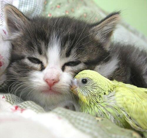 種類の違う動物同士がけんかをせずに寄り添い始めました! 人間も人種を越えて仲良くできますか?