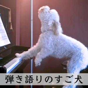 ピアノを弾き語りをするすごいワンちゃんが監視カメラに映った !?