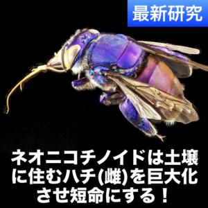 ネオニコチノイドは土壌に住むハチ(雌)を巨大化させ短命にする(2019年米国研究)