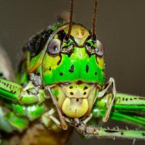 イミダクロプリドとは? ヒトへの影響はないと言われているがその代謝物に毒性あり!? ほんの微量でも昆虫に影響あり (2019年最新論文)