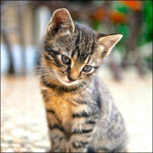 【動画】ネコの手も借りたい・・・借してくれた♬